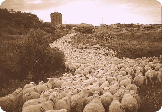 Cañada Real Segoviana